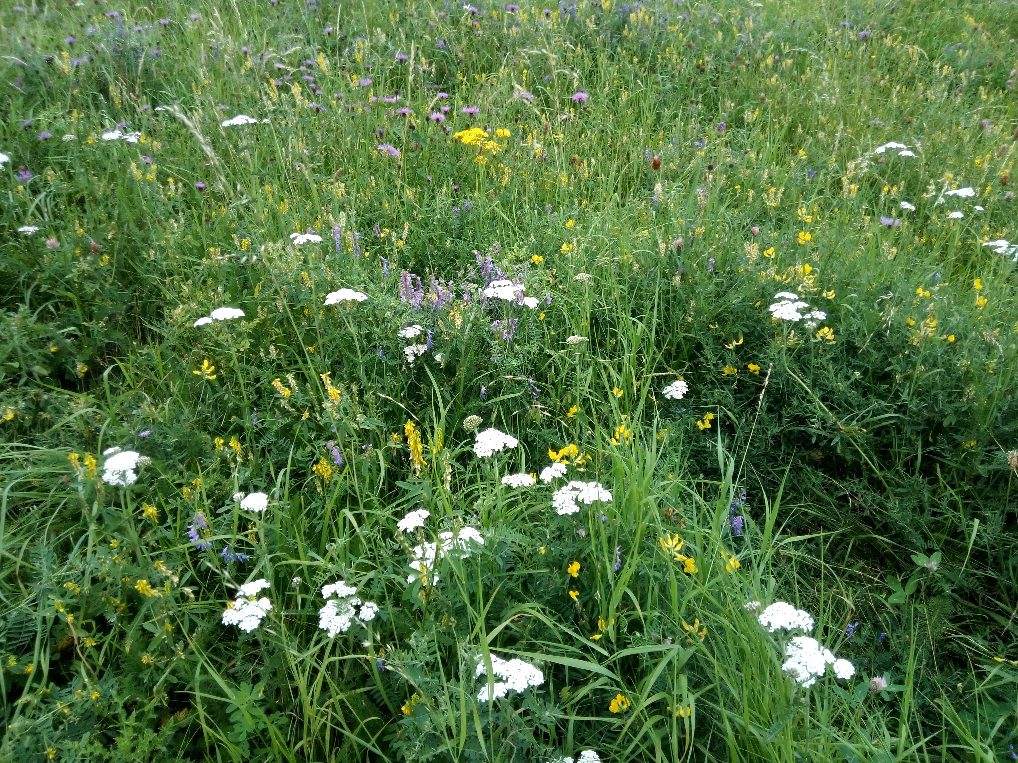Wildflower meadow by Karen Hands